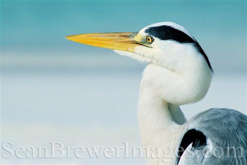 Sea Crane